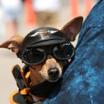 Pet Motorcycle Goggles